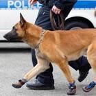 Se anche i cani-poliziotto temono l'asfalto rovente