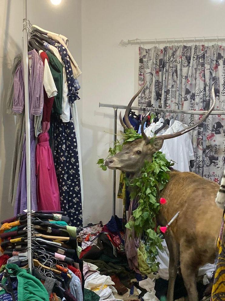 Cervo entra in un negozio di vestiti, caos a Cortina: animale ...