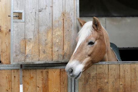 siti di incontri equestri gratuiti